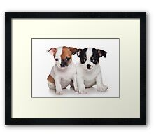 Two puppies chihuahua Framed Print