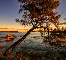 Casuarina by the Sea. by Bette Devine