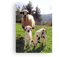 Ewe and Twin Spring Lambs  Canvas Print