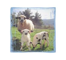 Ewe and Twin Spring Lambs  Scarf