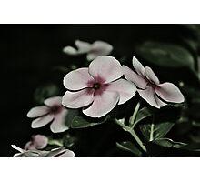 Paper Posies Photographic Print