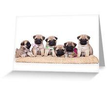 Six charming pug puppy Greeting Card