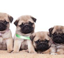 Six charming pug puppy Sticker