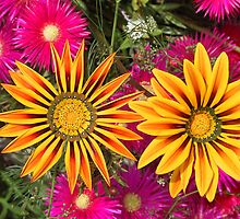 gazania,pigface,flower by kellyinsull