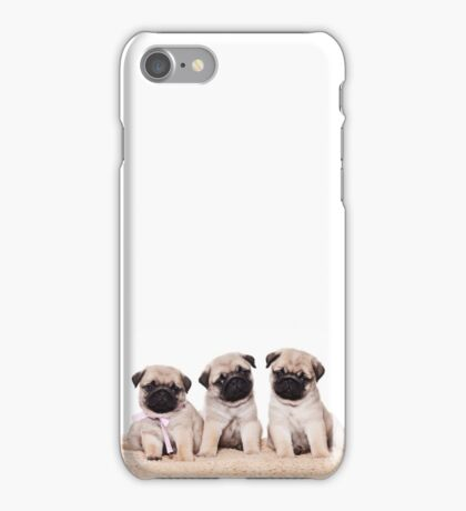 Three pug puppy iPhone Case/Skin