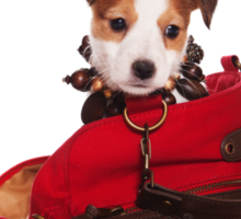 Jack Russell Terrier puppy and a red bag Sticker