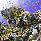 OCEAN OASIS by NICK COBURN PHILLIPS
