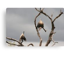 vultures drying off Canvas Print