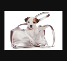 Jack Russell Terrier puppy and a bag Kids Clothes
