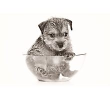 terrier puppy Photographic Print