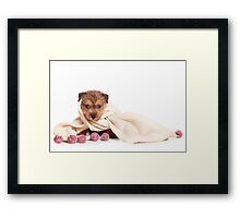 terrier puppy Framed Print