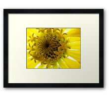 A Yellow Beauty up close Framed Print
