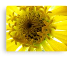 A Yellow Beauty up close Canvas Print