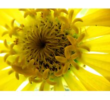 A Yellow Beauty up close Photographic Print