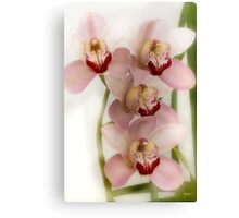 Beverly's Orchids Canvas Print