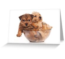 Two funny red terrier puppy in a cup Greeting Card
