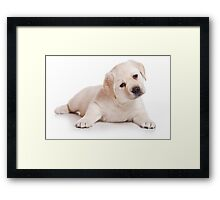 labrador retriever puppy Framed Print