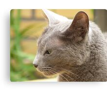 Perfect Profile Russian Blue  Canvas Print