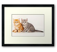 Two striped kitten Framed Print