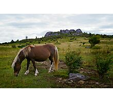Highlands Pony Photographic Print