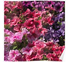 Colorful photo of pink purple flowers pattern  Poster