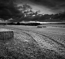 August Glory BW by Andy Freer