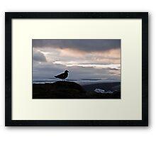 Bird at Glacier Lagoon Framed Print