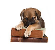 Funny brown puppy and book Photographic Print