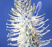 Blue Spiked Rampion (Mid Blue) by Lucy Heber-Percy