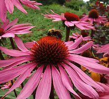 Bee and Echinacea by Nicole I Hamilton