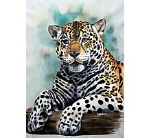 Jaguar. Photographic Print