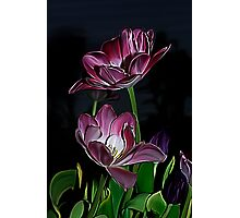 Purple tulips.... Photographic Print