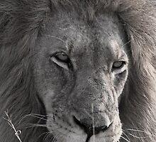 Lion Man - Photographic Nature Print by Karen van Beek