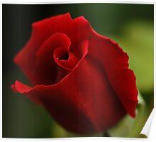 Single Rose Single Droplet. Poster