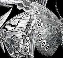 Butterfly Etchings by Susie Peek