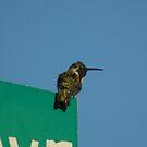 Hummingbird fun by Bonnie Pelton