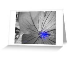Chinese Bellflower Greeting Card