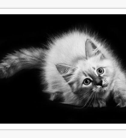 fluffy kitten Sticker