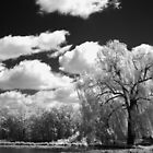 IR Willow by Colby English