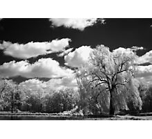 IR Willow Photographic Print