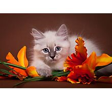 fluffy kitten with flowers Photographic Print