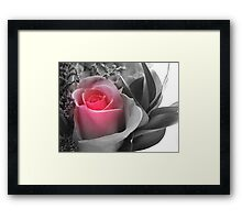 A Touch Of Pink... Framed Print