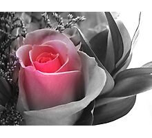 A Touch Of Pink... Photographic Print