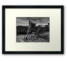 Bicycle At The Tulip Farm Netherlands Framed Print