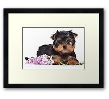 Puppy York and flowers Framed Print