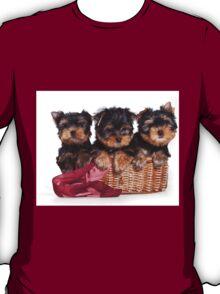Three Puppy York T-Shirt