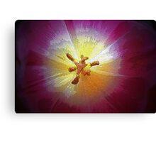 ~soul of a tulip~ Canvas Print