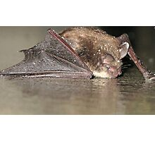 Baby Bat Photographic Print