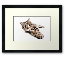 tabby cat with big paws Framed Print
