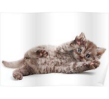 Funny fluffy kitten Poster